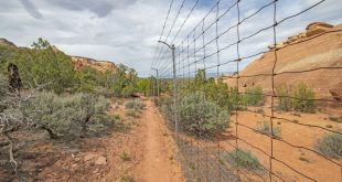 Border Fence in the Wilderness